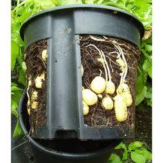 PotatoPot®, 1 Stück - BALDUR-Garten GmbH