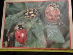 Lakeshore 9 pc Insects Wooden Puzzle #Lakeshore