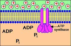 Liens de biochimie pour les etudiants