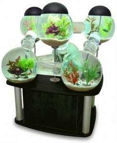 Acquario lusso - Acquario lusso  per pesci