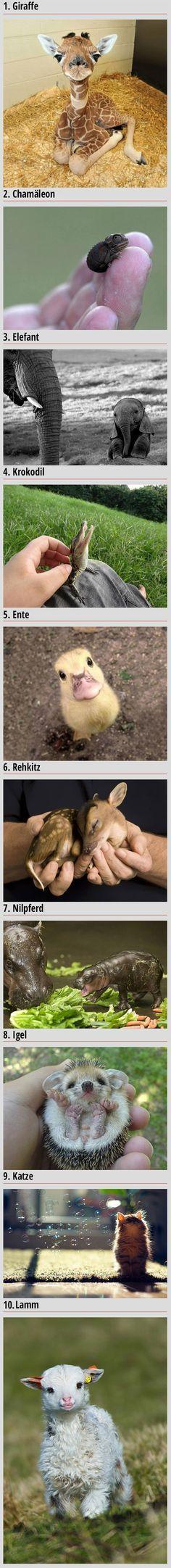 Die süßesten Tierbabys der Welt - Cuteness Overload Bild | Webfail - Fail Bilder und Fail Videos
