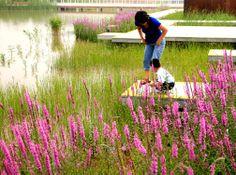 Tianjin Qiaoyuan Wetland Park