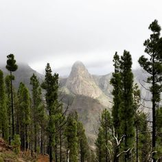 Garajonay National Park, La Gomera, Canary Islands