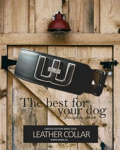 Leather collars and laeash