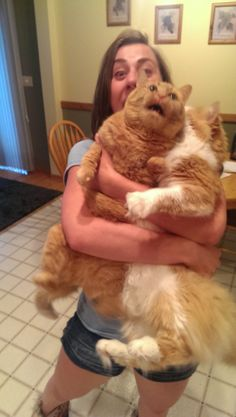 40 Cats Who Give Love A Bad Name. I HAVE NEVER SEEN ANYTHING THIS FUNNY IN MY ENTIRE LIFE. Bon Jovi + Cats = Extreme stomach pains from laughing so hard