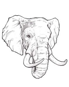 Afbeeldingsresultaat voor elephant drawings