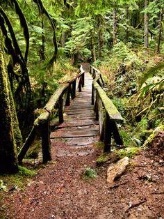 Carbon River Rain Forest Nature Trail