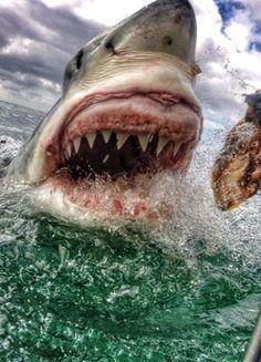 Guurrrl. I have Great White shark gums!!