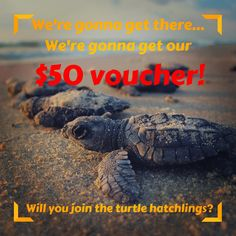 These #cute #turtle #babies know what's ahead! Yes - our $50 voucher  Will you join our #beach and #ocean #photocontest ? Read more information: https://www.magicfulhome.com/…/news/50-voucher-photo-contest or click the picture for the link. What's in the game? $50 voucher for our #vegan friendly #homedecor products   #spreadtheword to help us get 100 contestants-you can #win additional $25 voucher if one of your referred friends would win