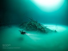 Cenote Angelita by TomStGeorge #nature #photooftheday #amazing #picoftheday #sea #underwater