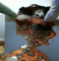 Watch this amazing video of a dog trapped in walls of deserted building getting freed by police!