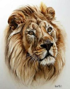 Watercolor lion tattoo, watercolor tiger, watercolor artwork, watercolor an Watercolor Lion Tattoo, Watercolor Tiger, Watercolor Artwork, Watercolor Animals, Watercolor Pencil Art, Pencil Painting, Animal Paintings, Animal Drawings, Pencil Drawings