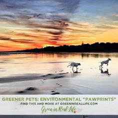Greener Pets: Reducing our Environmental Pawprint - Green in Real Life Compost Bags, Healthy Environment, Rainbow Bridge, Losing A Pet, The Locals, Pet Care, Your Pet, Real Life, Wildlife