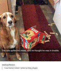 It wasn't me - Imgur