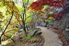 Tranquil path leading to the waterfall on Gumosan Mountain in Gumi, South Korea