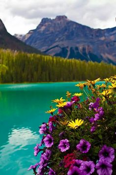 Emerald Lake Flowers,  Canada