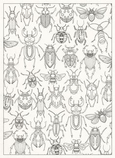 Containing 20 detachable postcards of Johanna Basford's beautiful drawings from the inky world of her Secret Garden. Bug Coloring Pages, Coloring Books, Bug Art, Insect Art, Doodles Zentangles, Bugs And Insects, Art Plastique, Art Lessons, Embroidery Patterns