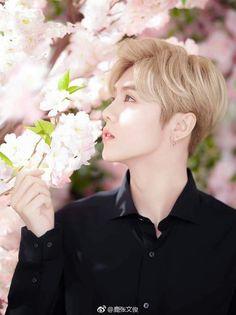 Perfeição tem nome ... Luhan