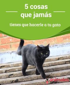 5 cosas que #jamás tienes que hacerle a tu #gato  Hace siglos que los mininos #eligieron estar junto a los humanos. Sin embargo, a pesar del tiempo trascurrido, algunas personas no terminan de #entender a estas magníficas criaturas.
