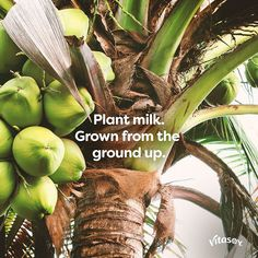Grown for your enjoyment plantmilk