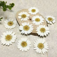 Model Number: Dried FlowersStyle: FlowerFlower Style: Flower HeadOccasion: Wedding, holidays,home decorationName: Flores decorative dried press White chrysanthemumColor: WhiteSize for White Chrysanthemum: 30 PcsType: Decorative Flowers & Wreaths, Daisy White Chrysanthemum, Cheap Wedding Decorations, Diy Jewelry Supplies, Flower Fashion, Festival Party, Dried Flowers, First Birthdays, Party Supplies, Bridal Shower