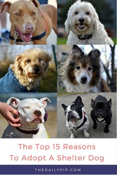 Top 15 Reasons To Adopt A Shelter Dog during Adopt-A-Shelter-Dog Month