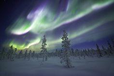 Northern Lights Over Pine Forest Near Kiruna, Norrbottens län, Swedish Lapland