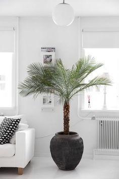 Actueel - 5 Luchtzuiverende kamerplanten - https://www.tuincentrumoverzicht.nl/actueel/5396/5-luchtzuiverende-kamerplanten