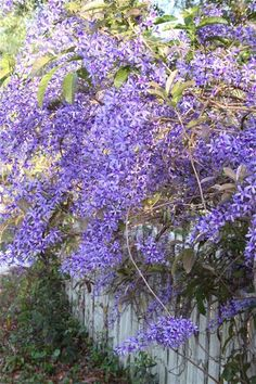 I can still smell wisteria from my childhood.