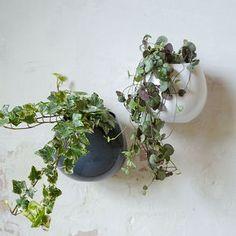 Ceramic Wall Hanging Plant Pot - the greenhouse edit