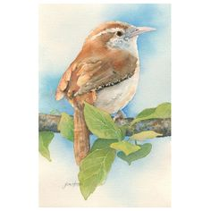 Taking Advantage, Wrens, Hand Painting Art, Arts And Crafts, Backyard, Birds, Hand Painted, Rustic, Photo And Video