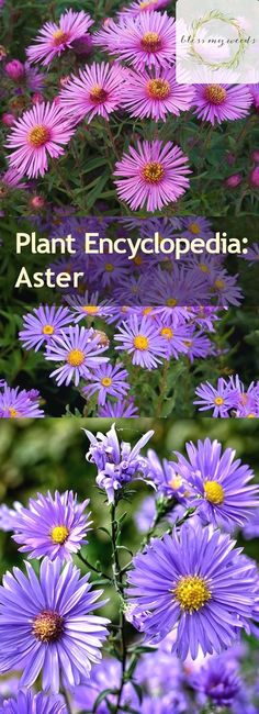 Irises: A Gardener's Encyclopedia download pdf