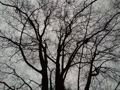 Tree, Black, Forest, Silhouette, Winter, Veins