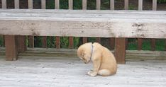 sad dog Thats not fair. The cat gets to poop in th - dog I Want To Cuddle, Cute Dogs And Puppies, Doggies, Puppy Care, All Gods Creatures, Shelter Dogs, Shelters, Mans Best Friend, Dog Owners