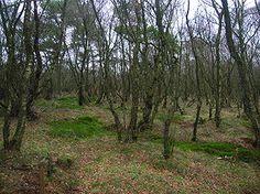 Sure moser og tørvemoser.  Mose betegner et vedvarende sumpet vådområde. Mange moser er opstået ved tilslemning af søer. Det vil i første omgang føre til dannelsen af en lavmose, som har mange træk fælles med den oprindelige sø. Mange lavmoser er derfor både mineralrige og neutrale eller basiske. Under specielle forhold fortsætter moseopbygningen ved opvækst af forskellige tørvemosser (Sphagnum), sådan at der dannes en højmose, hvor forholdene er kendetegnet ved mineralfattigdom og sur…