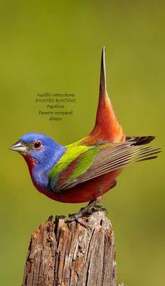 Cute Birds, Pretty Birds, Small Birds, Colorful Birds, Little Birds, Beautiful Birds, Animals Beautiful, Wild Photography, Animal Photography