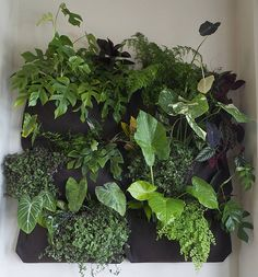 Another nice green wall - I have some wooly pockets to use! Vertical Jungle in six Wooly Pockets by fraying Bamboo Garden, Garden Planters, Indoor Garden, Indoor Plants, Indoor Outdoor, House Plants Decor, Plant Decor, Pocket Garden, Zebra Plant