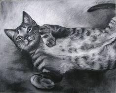 gray tabby cat--stripes and polka dots like Ollie