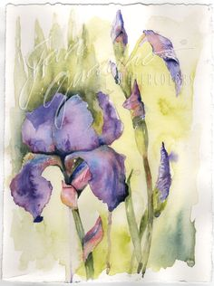 Irises! What a stunning flower, but they come to us and leave so soon!