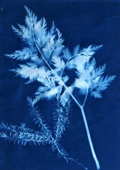 A perfect way to capture the beauty of your garden and add to your cabinet: Creating Cyanotypes (Sun Prints) Shibori, Mood Board Inspiration, Sun Prints, Natural Forms, How To Dye Fabric, Fabric Painting, Oeuvre D'art, My Favorite Color, Shades Of Blue
