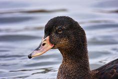 Contemporary, Animal Kingdom, Wordpress, Birds, Animals, Blog, Animales, Animaux, Bird