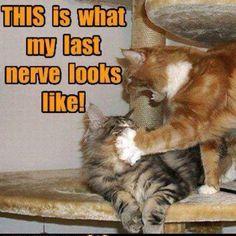 My last nerve!!