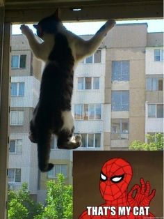 Where To Pin This�cartoons Cute Animals Funny As Shineola. Ftw! Funny Real Funny Spidey . - Click for More...
