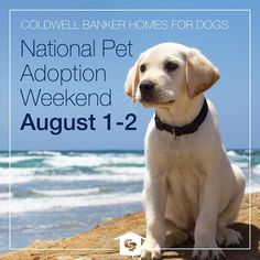 Coldwell Banker National Pet Adoption Weekend with Adopt-a-Pet.com is August 1-2!