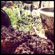 DIY Springtime Seedling Garden Starts