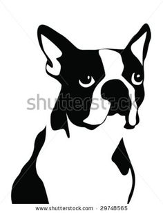 boston terrier | Boston Terrier vector illustration - stock vector