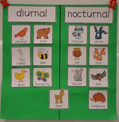 Here's a set of pictures for sorting nocturnal and diurnal animals. Post includes examples of student journal entries.