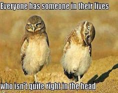 More Than Funny Pics, Hilarious LOL Images, Sarcastic Motivational Posters and More! If It Ain't Sarcastic, It Sucks! Funny Owls, Funny Animals, Cute Animals, Funny Birds, Animal Pictures, Funny Pictures, Funniest Pictures, Amazing Pictures, Bird Pictures