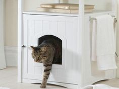 Top Ten For Cat Lovers - We Love Cats and Kittens