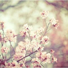 Nature photography Spring flowers pink wedding decor shabby chic... (€27) ❤ liked on Polyvore featuring backgrounds, pictures, flowers, photos e images